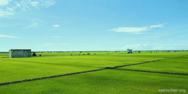 sekinchan-paddy-field-view-from-sky